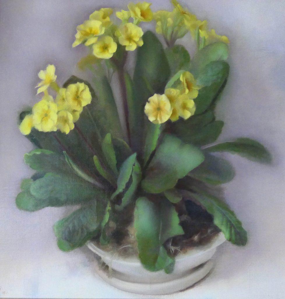 Johannes van der Kooij - bloeiende primula in pot - Liquid Sky Gallery